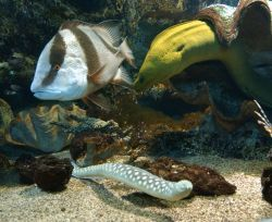 Campsite France Vendee, Aquarium Noirmoutier